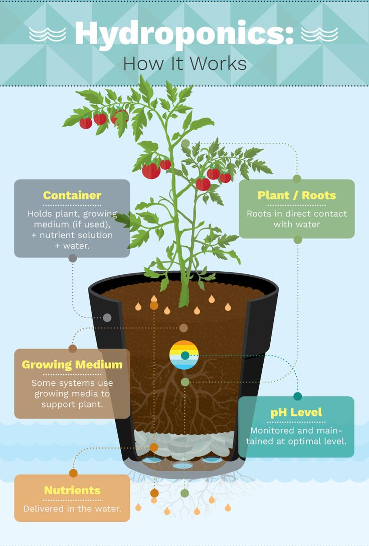 the two main categories of hydroponic growing