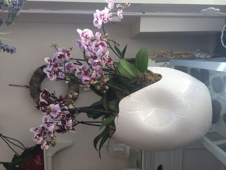 Orchidee!!!!