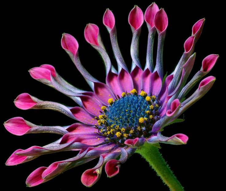 Flowers+All+Over+The+World   Best Flowers In The World: Best Flowers In World
