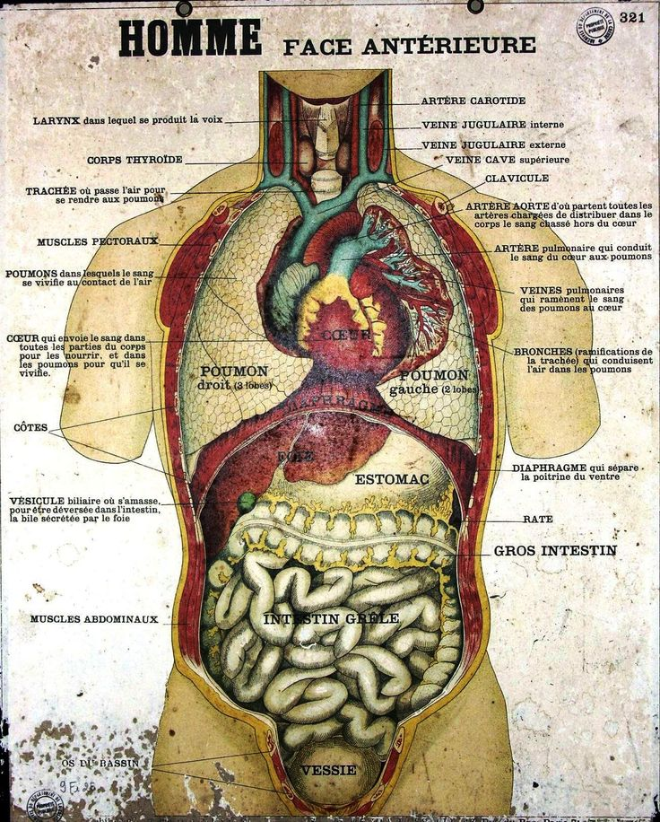 Picture of anatomy of body
