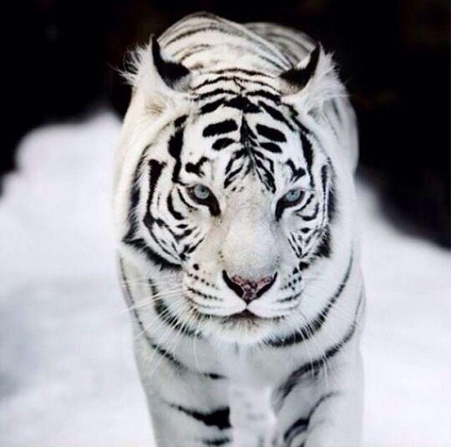 Unglaublich schöne Tiere!