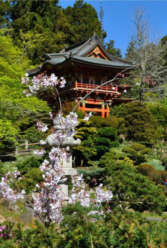 Cherry Blossoms In Sf S Japanese Tea Garden Japanesegarden Japanese Garden San Francisco Tea Garden Weekend In San Francisco Japanese Garden