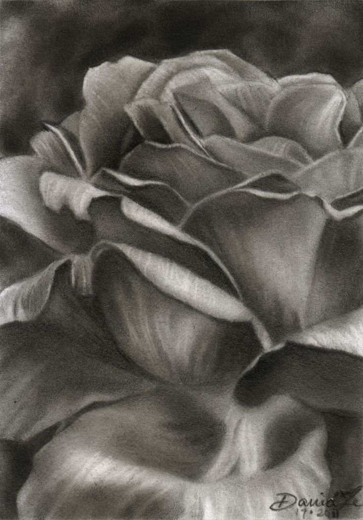 Pencil drawings of flowers