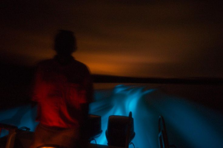 The Bioluminescence Tour in Hopkins, Belize