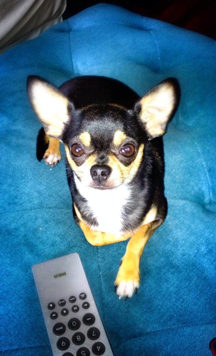 informative speech the dog whisperer Essays - largest database of quality sample essays and research papers on informative speech outline on dogs.