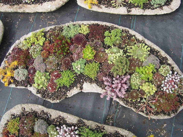 Great shallow hypertufa planters with sedums and sempervivums part Portland cement parts peat moss and parts perlite or even vermiculite can be used in place of