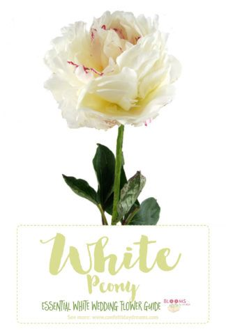 Best 25 White Flowers Names Ideas Only On Pinterest Wedding Bouquets Seasonal And Bridal Flower