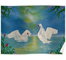 Gifts for animal, swans, lovers, Poster