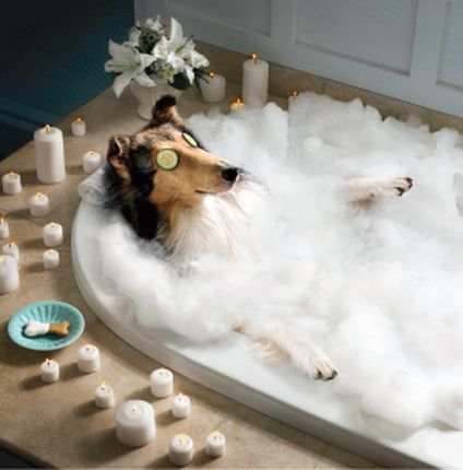 Dogs can lower your stress while you're at work. There has been a growing trend recently in which employees are allowed to bring their dog to their place of employment. For More Information Visit  http://mydogsdayinn.net/pet-grooming-cypress-tx/