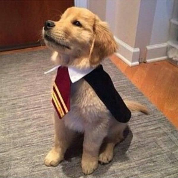 Ideas & Accessories for your DIY Harry Potter Halloween Dog Costumes - maskerix.com