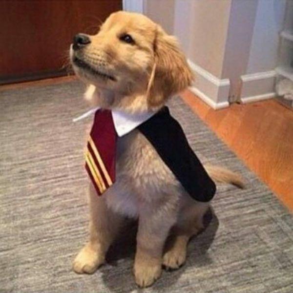 DIY Harry Potter Halloween Dog Costumes - maskerix.com