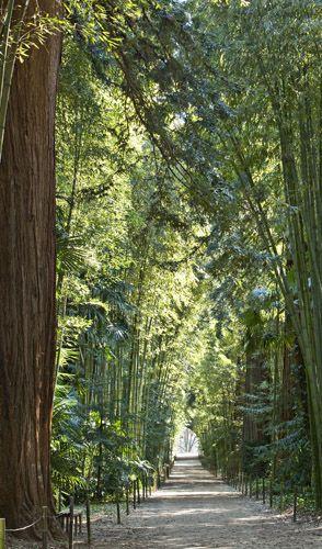 La Bambouseraie de Prafrance