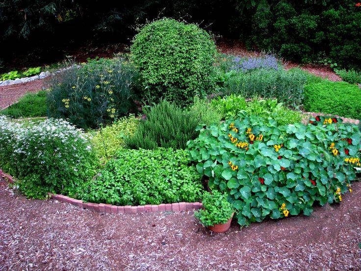 pestovani bylin bylinek doma a na zahrade co jim prospiva a co jim skodi 2