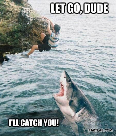 Sharks are just misunderstood. All they want is to be your friend then eat you. That is all.