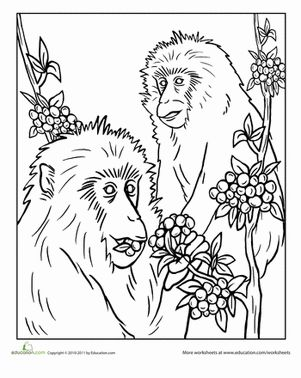 Snow Monkey Coloring Page
