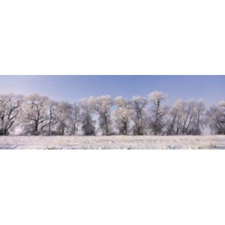 Cottonwood trees covered with snow Lower Klamath Lake Siskiyou County California USA Canvas Art - Panoramic Images (18 x 6)
