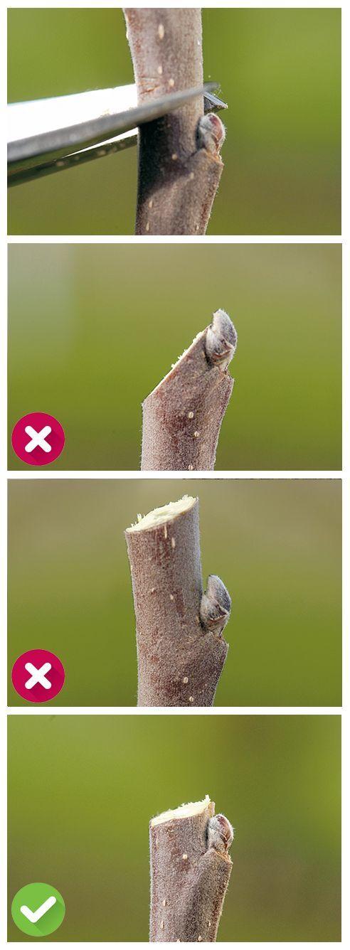 So geht das richtig mit dem Baumschnitt ***