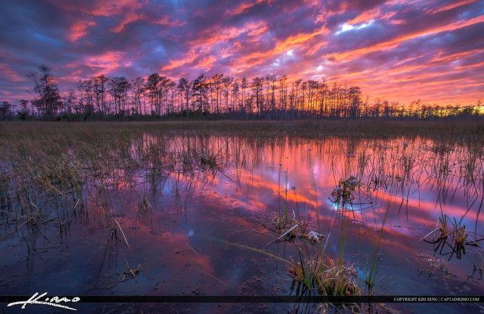 Florida Wetlands Landscape Sunset Colors PBG
