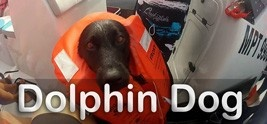 Kira is an ordinary dog with extraordinary friends. Each day, she leaves boring canine pursuits on the shore and heads out to sea to do something much more exciting: swim with wild dolphins.  Earth Touch Web TV