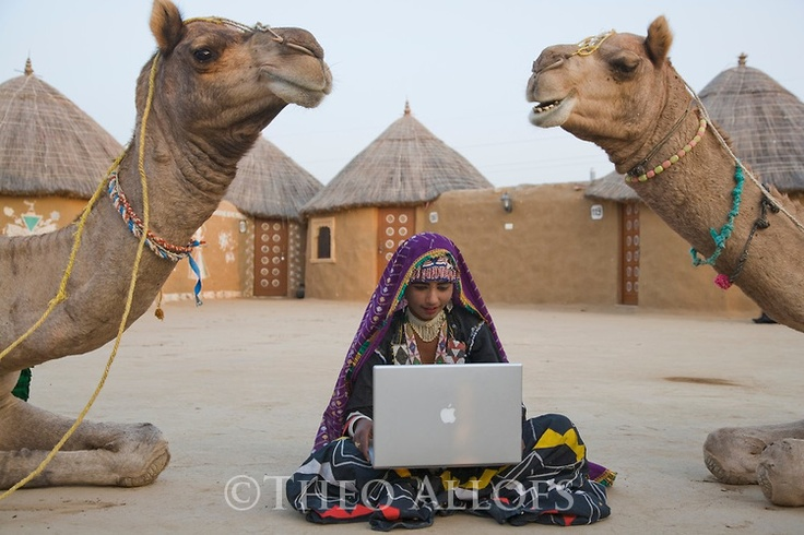 Rajasthani dancer in traditional costume with laptop sitting between curious camels in desert camp; Rajasthan