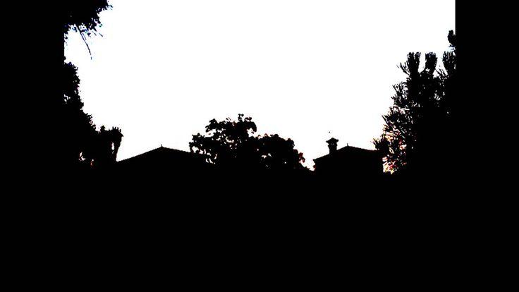 6 perc hajnali madárcsicsergés