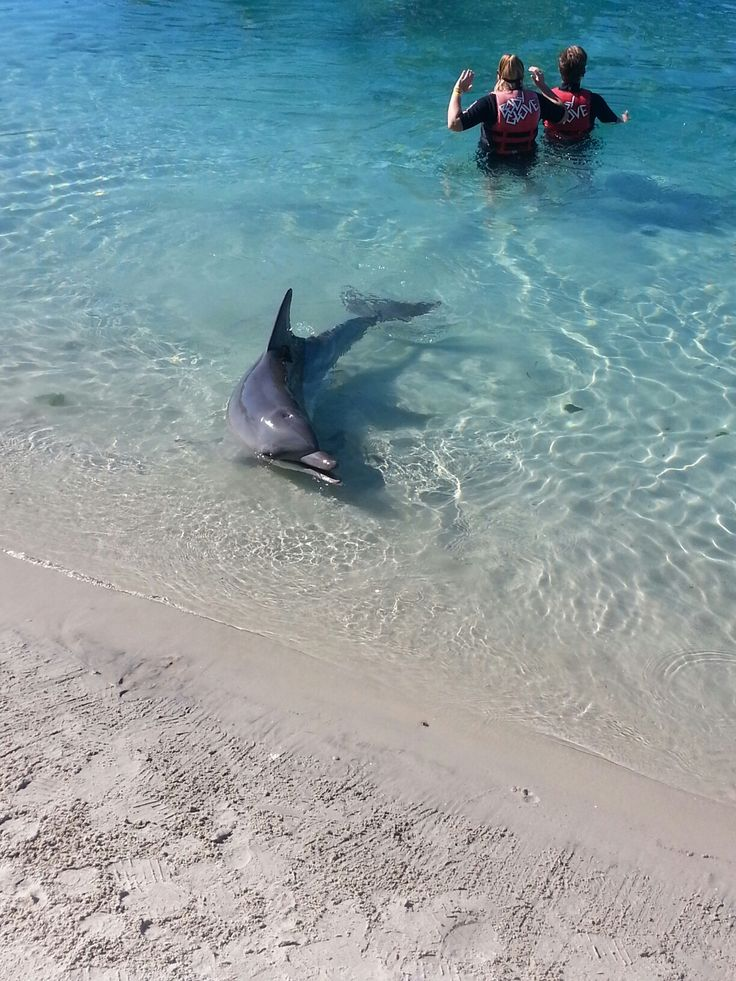 Dolphin ( seaworld )