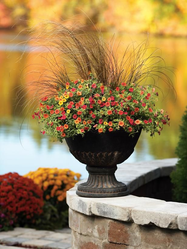 Calibrachoa blooms from summer to fall, until the first hard frost. Pictured is Superbells Red