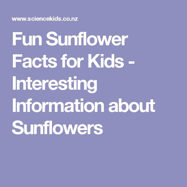 Fun Sunflower Facts for Kids - Interesting Information about Sunflowers