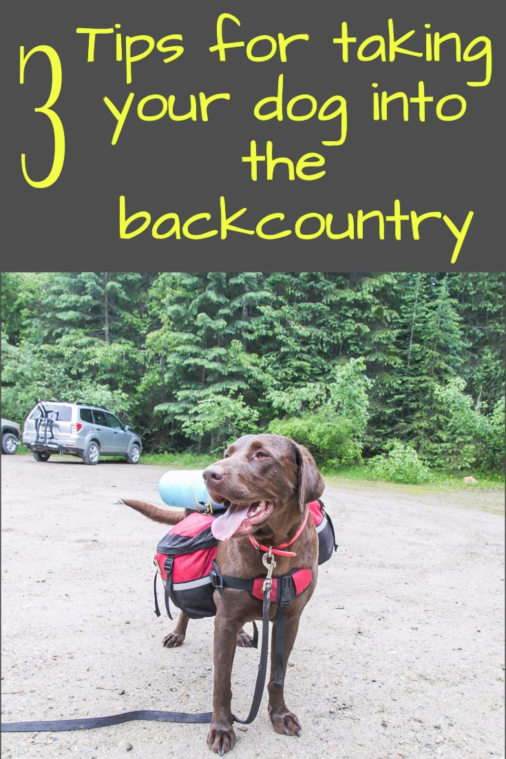 What three things you should know before deciding to take your dog into the back country with you