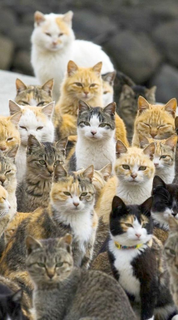 Get Some Cats And Kittens For Sale Gumtree Cute Cats Cute Cats And Kittens Pets