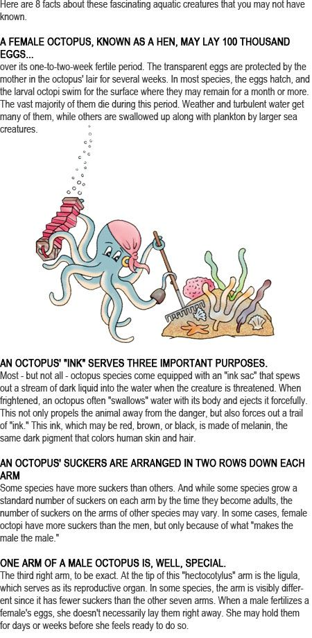 Octopus facts for kids http://firstchildhoodeducation.blogspot.com/2013/09/octopus-facts-for-kids.html