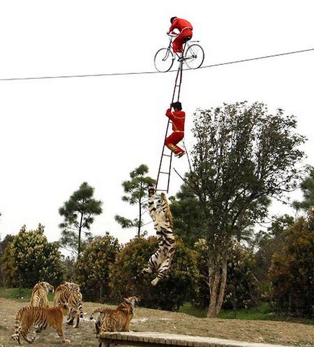 Circus horror as three-year-old is sent 8 metres above tiger pit at Changzhou Yancheng zoo, China - by Matt Blake, UK