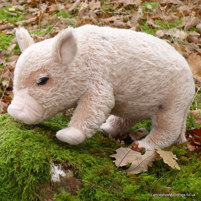This Micro pig is descended from a rare breed Middle White pig which dates back to 1852.  'Rosie' is made from mohair and is realistically modelled and scaled on a live Micro pig.  'Rosie' features shaving and air brush detailing and is made from 41 seperate pieces of fabric!