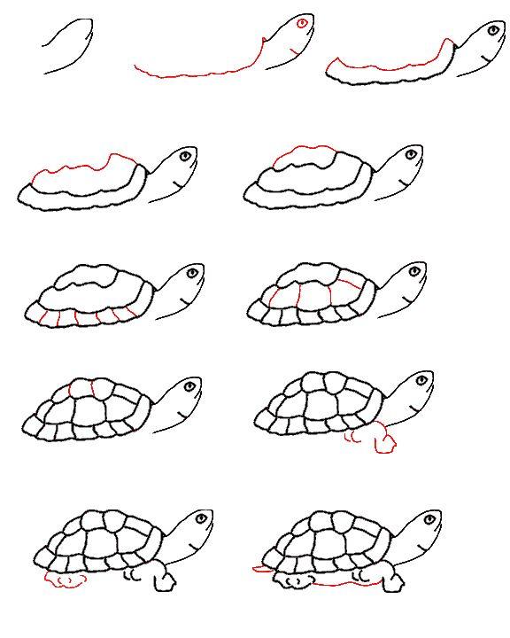 18 Besten Ninja Turtles Bilder Auf Pinterest: 17 Best Images About Turtle On Pinterest