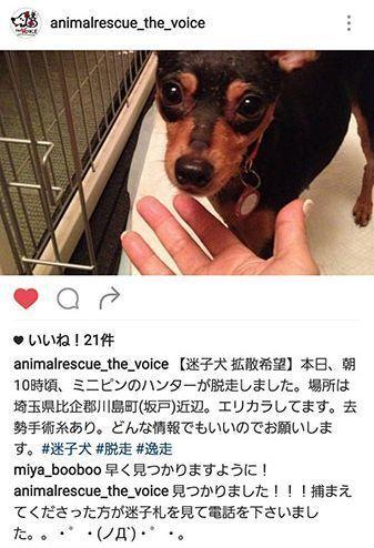 足が速い犬・ミニチュア・ピンシャーに多い脱走癖?!