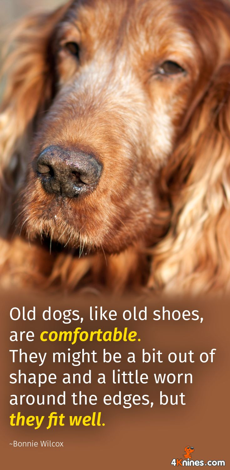 We love old dogs