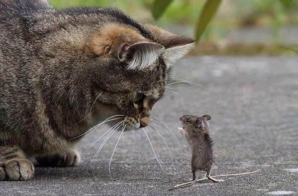 Write a conversation between the cat and mouse. Tom and Jerry?: Mice, Toms, Cats, Mouse, Animals, Friends, Funny, Tom And Jerry, Photo