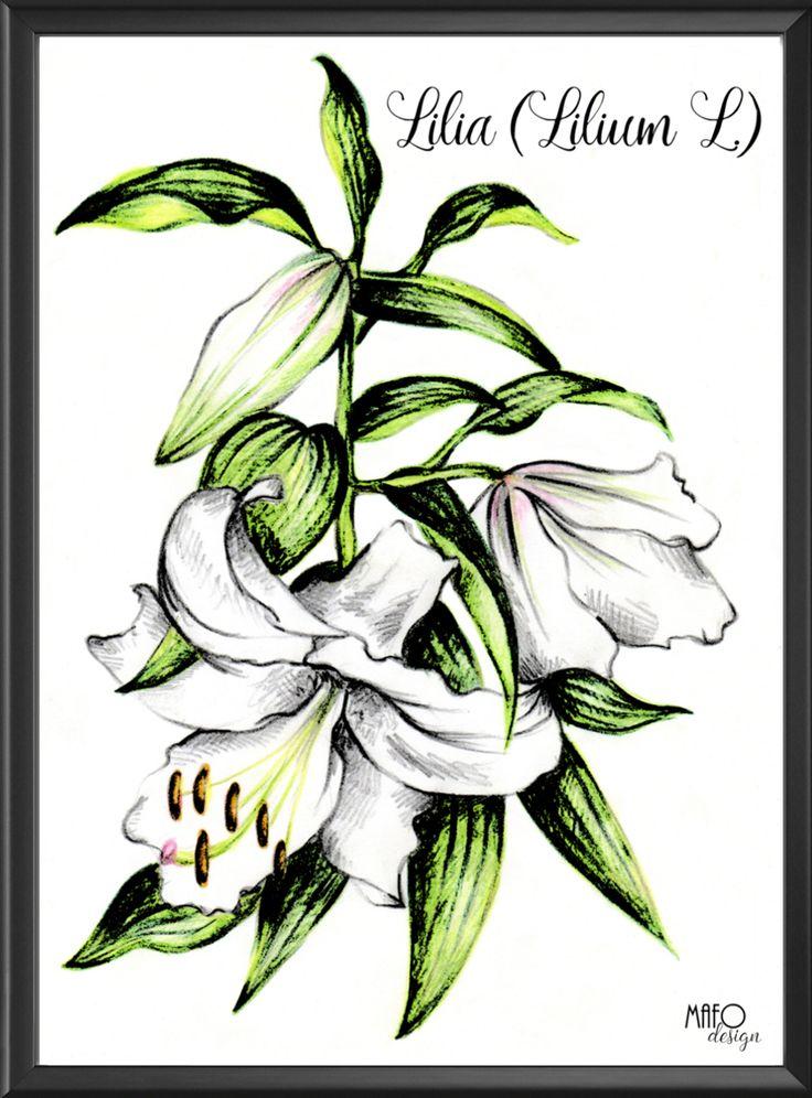 Plakat z ryciną Lilii. Do kupienia na www.mafodesign-sklep.pl #poster #lilium #design #decor #plakat #lilia #vintage