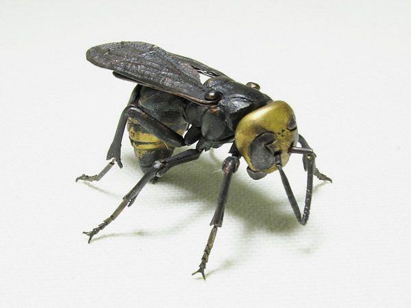 Haruo MITSUTA - Jizai Japanese giant hornet