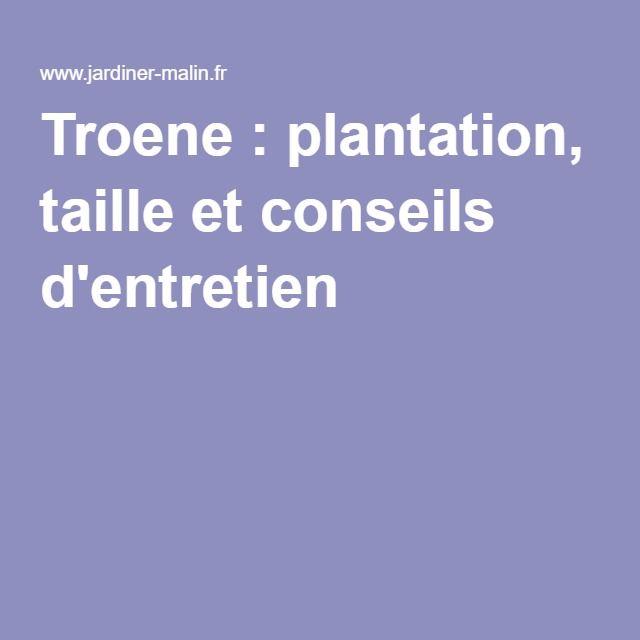 Troene : plantation, taille et conseils d'entretien