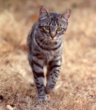 Did you know that 2 un-neutered cats = 80+ million kitties: http://petnewsandviews.com/2013/02/2-uncontrolled-breeding-cats/ …