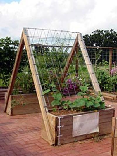 I like this one, because you can get underneath to harvest hanging fruit. Also, as leaves covered the trellis, it would shade the veggies...