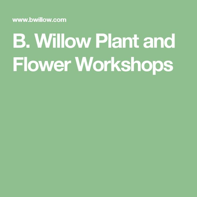 38 best will this get your attention images on pinterest clinton b willow plant and flower workshops fandeluxe Gallery