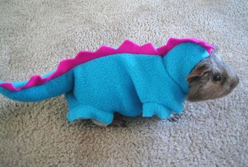 Guinea pig in a dinosaur costume. Want.