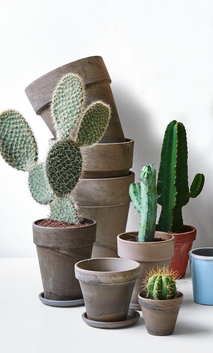 Tag den nye trend med hjem. De smukke og dekorative kaktusser bringer natur ind i dit hjem og kan bruges i alle rum. Samt kaktusser er nemme at holde. #kaktus #sukkulenter #inspirationdk #bolig #botanik #trend #boligtrend