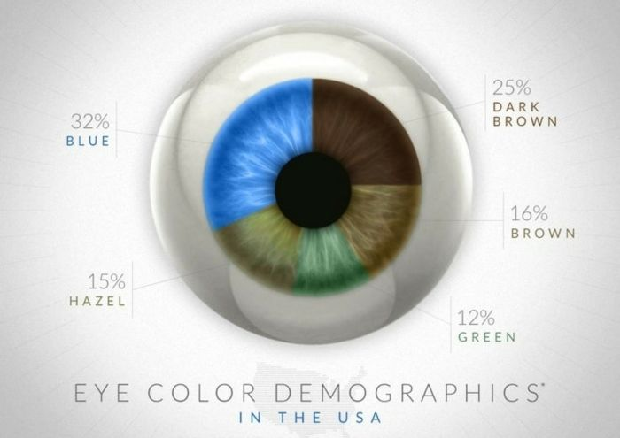 eye color chart, drawing of an eye with multicolored iris, specifying what percent of US citizens have blue, brown or dark brown, hazel or green eyes