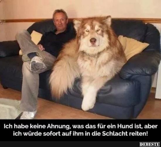 Ich habe keine Ahnung, was das für ein Hund ist..