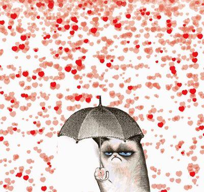 Grumpy cat loving feeling