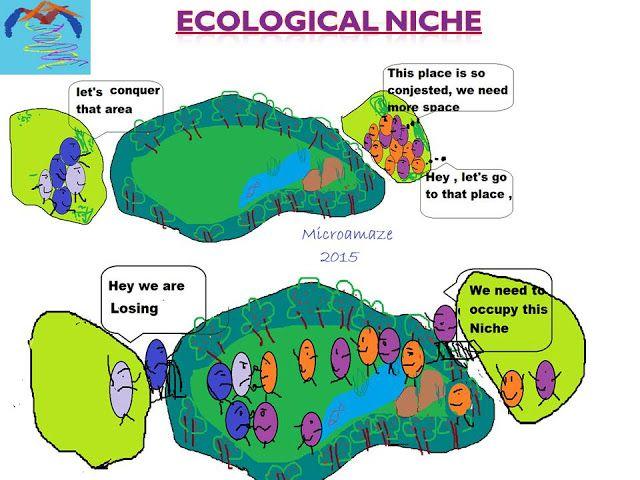Microamaze: Ecological niche