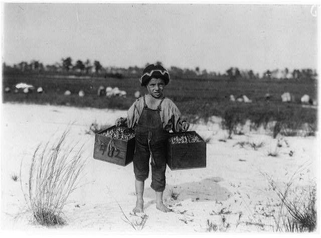 Ο Salvin Nocito μεταφέρει βατόμουρα στο Νιου Τζέρσεϊ (1910)